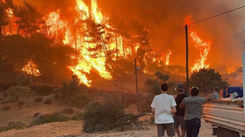 Orman yangınlarındaki yanan ağaçlar satışa çıkarıldı