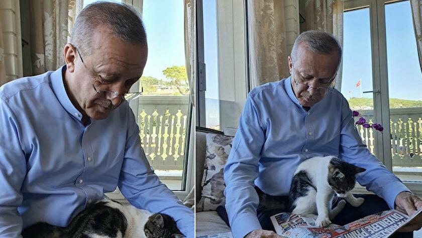 Cumhurbaşkanı Erdoğan'dan 'Pıt Pıt Şeker' paylaşımı