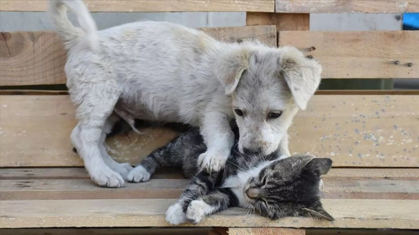 4 Ekim Hayvanları Koruma Günü mesajları ve sözleri!